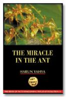The Miracle in the Ant (inside colour pages)