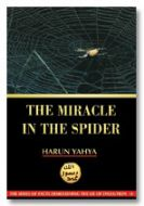 The Miracle in the Spider (inside colour pages)